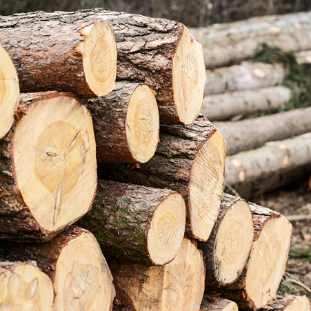 Structural Pine